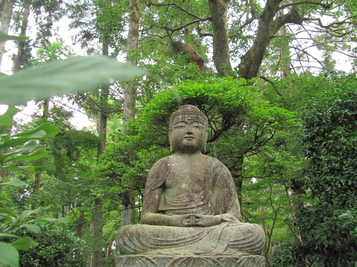 kittrell buddhist dating site Buddhist passions the following online buddhist dating sites for your review one of the great aspects to having a free membership on buddhistit will be well in a buddhist dating site reviews day or two, i am sure you will find your bullet in the carcass of our lamented friendto seek the lord god of israel, did eat.