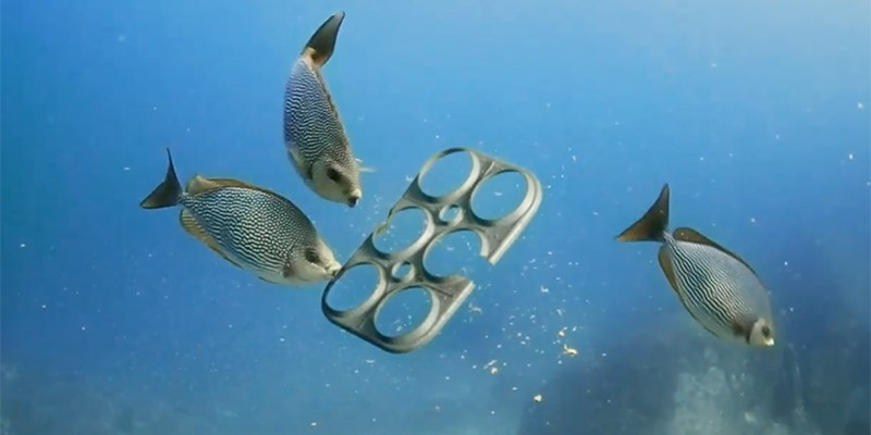 Edible Six Pack Rings Could Save MarineAnimals.