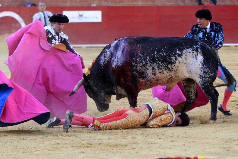 Spanish matador gored to death in bullfight live on TV.