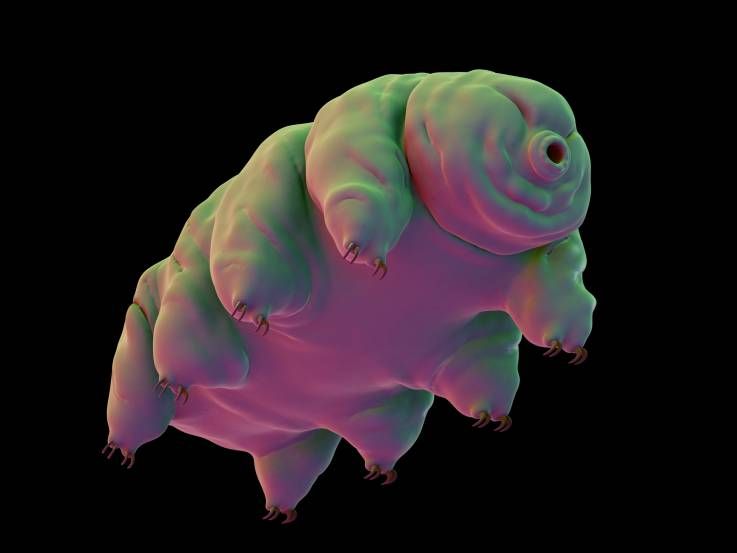 Scientists worried by thousands of tardigrades crash-landing on the moon: 'We have no idea what canhappen'