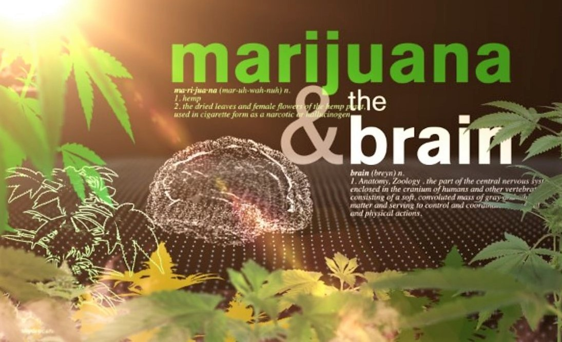 Marijuana may boost, rather than dull, the elderly brain.